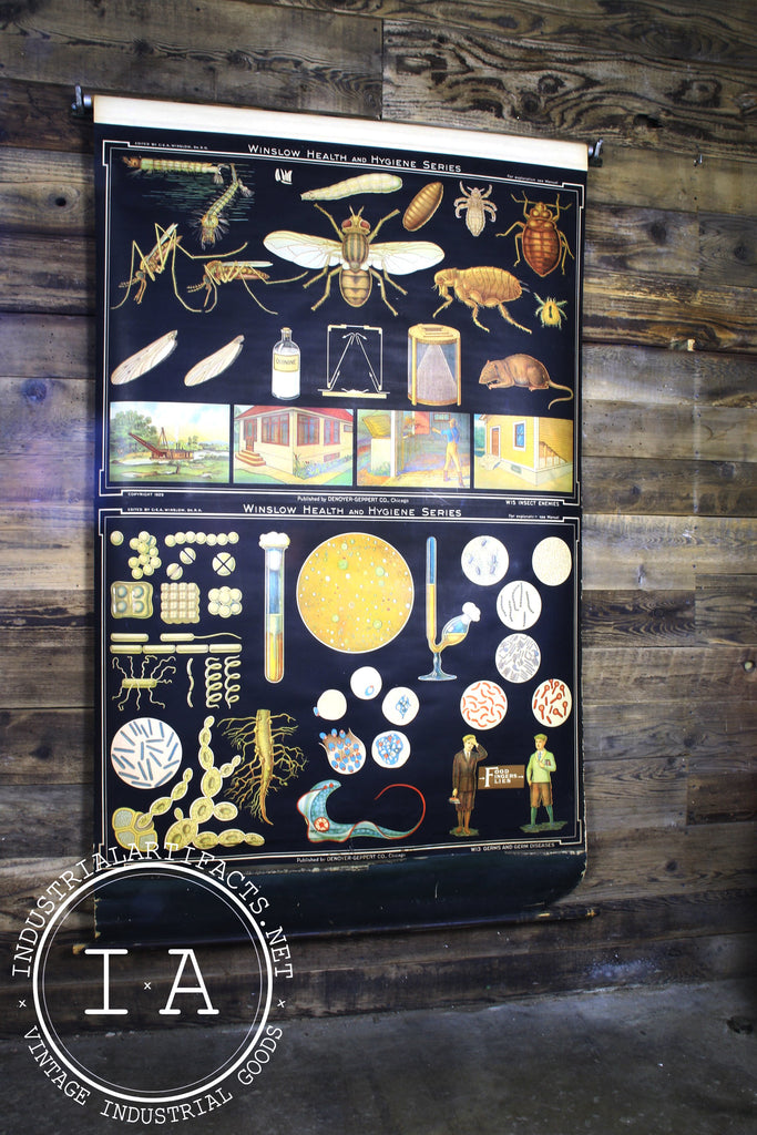 Vintage Early 1900s Biological Diagram Pulldown Screen