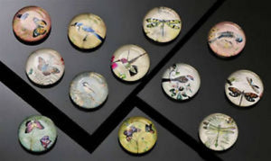 12 Botanical Dragonfly, Bird, & Butterfly Glass Magnets