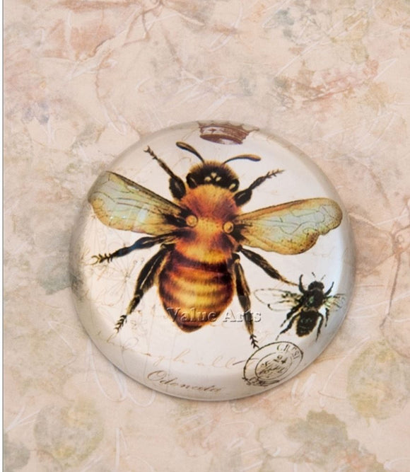 Glass Dome Vintage Bumble Bee Paper Weight/Paperweight