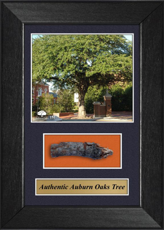 Auburn University Toomers Corner Auburn Oaks w/ the Actual Wood- Sold Out Edition