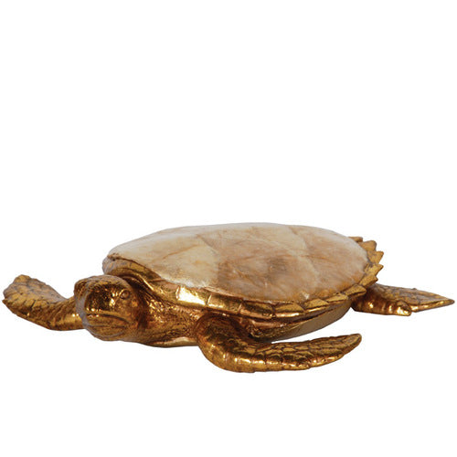 Golden Capiz Turtle