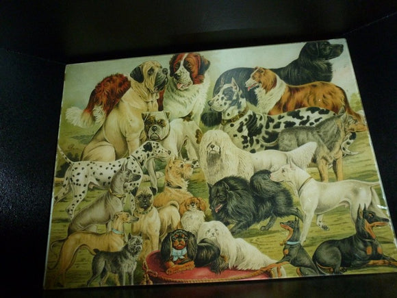Dog Study #2 Decoupage Tray