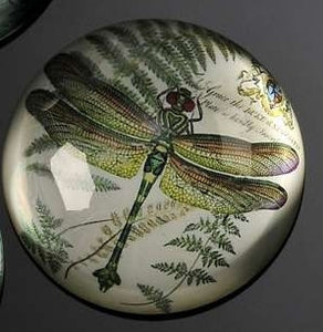 BOTANICAL GREEN DRAGONFLY GLASS PAPERWEIGHT