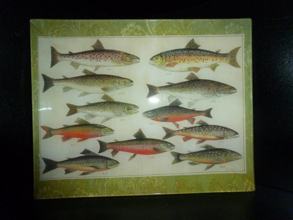 Trout Fish Study Decoupage Tray