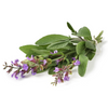 Therapeutic Clary Sage Essential Oil - Antidepressant