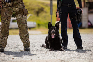 K9 BASIC GUNFIRE COURSE