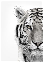 White Tiger | POSTER BOARD