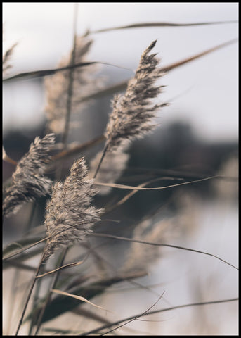 Mellow Grasses 3 | POSTER BOARD