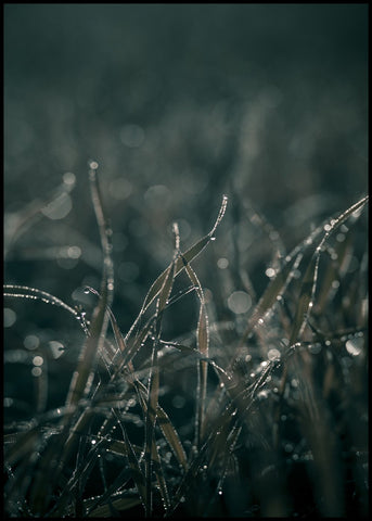 Mellow Grasses 5 | POSTER BOARD