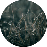 Mellow Grasses 5 | CIRCLE ART