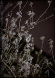 Mellow Grasses 6 | POSTER BOARD