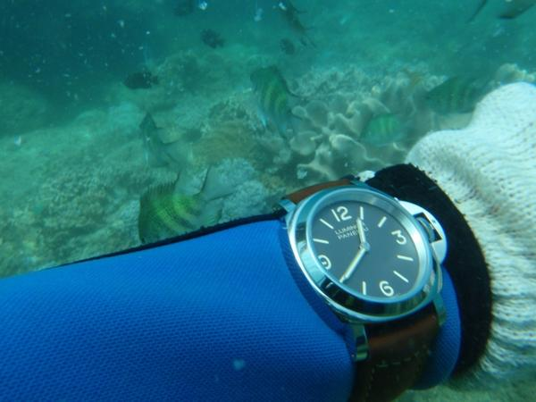 watch-dive-strap
