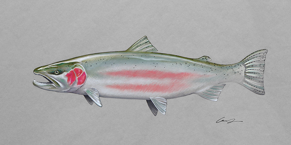 Buck Steelhead Large Scale Fine Art Original