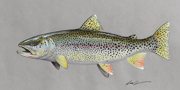 Coastal Cutthroat Fine Art Print