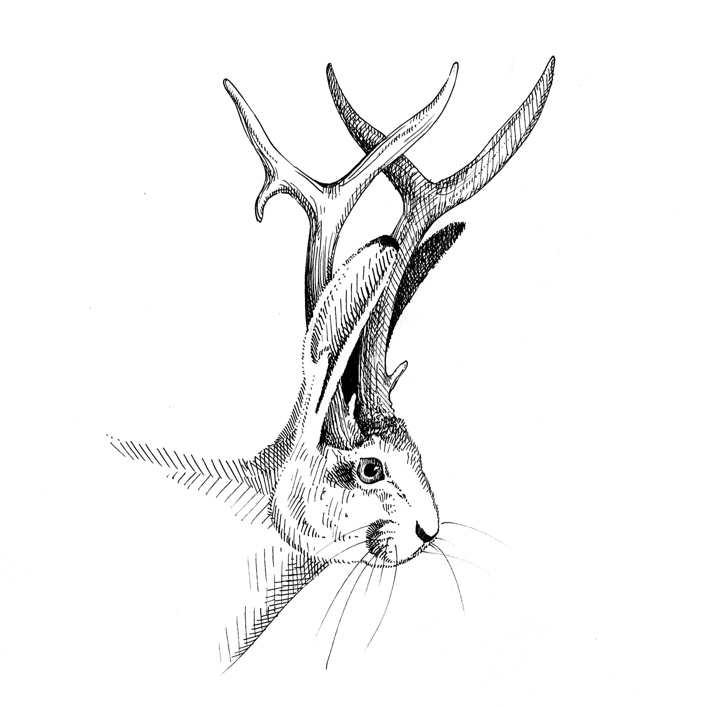 Jackalope Original Artwork