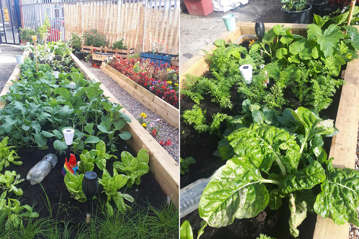 New Leaf Compost supports west Belfast gardening group to 'green' waste space