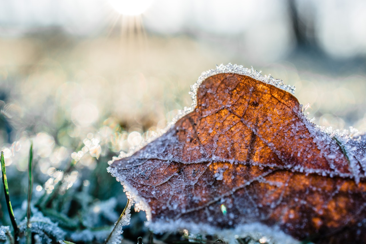 Winter is here – keeping your garden in good shape