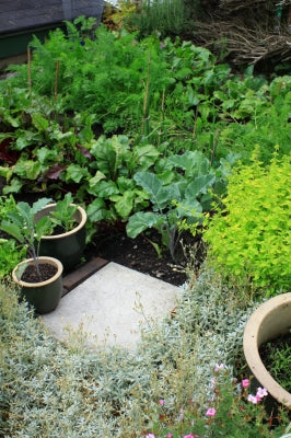 Container Gardening with New Leaf Compost