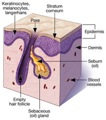 pore hair diagram treatment korea