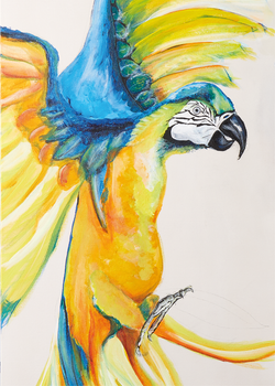 Art print of a yellow parrot by Anne Ditte.