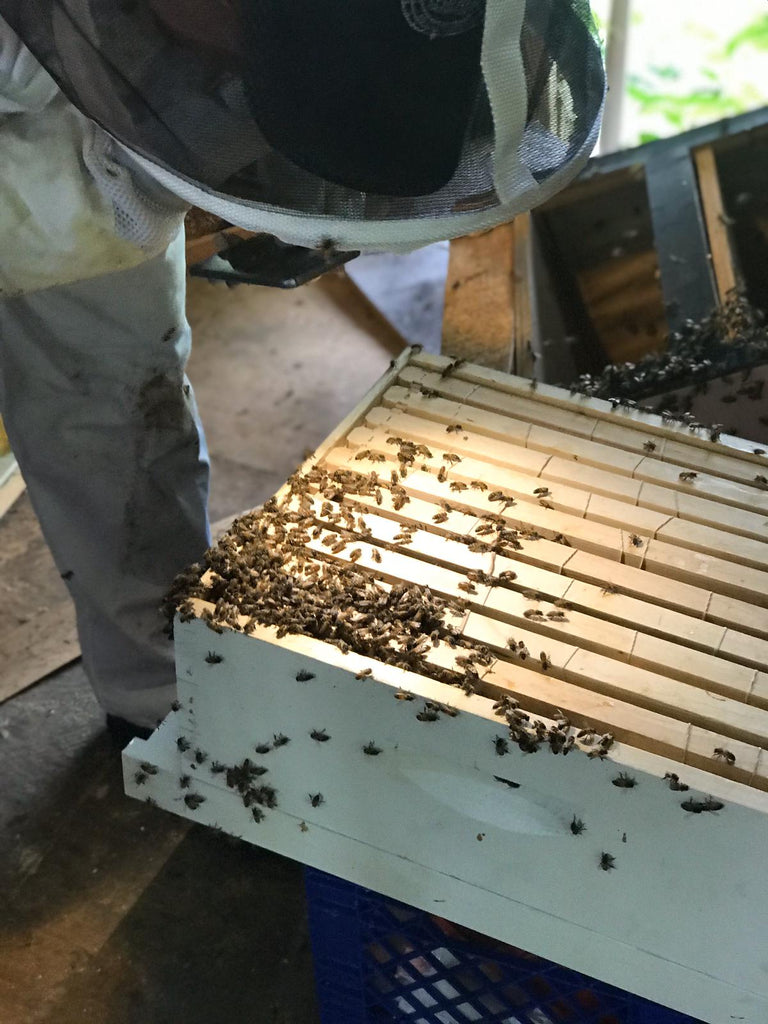 bee rescue / extraction in the rain forest