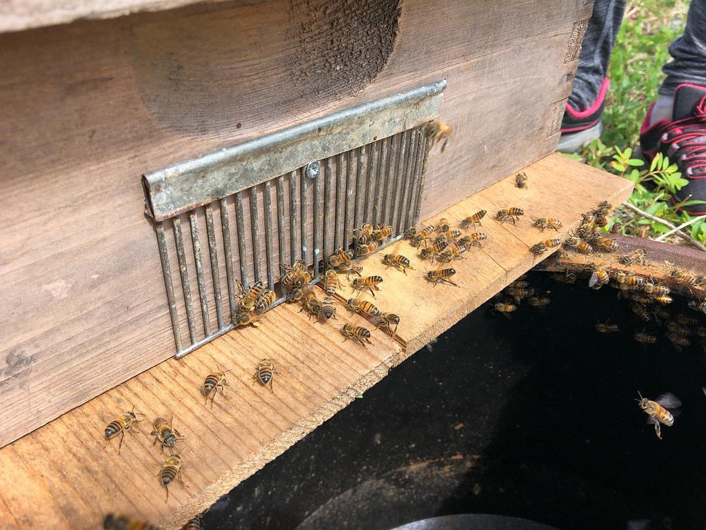 honeybees in langstroth hive