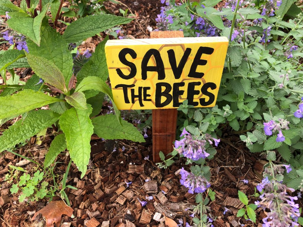 save the bees how to plant a wildflower garden