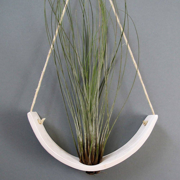 White Hanging Ceramic Air Plant Cradle