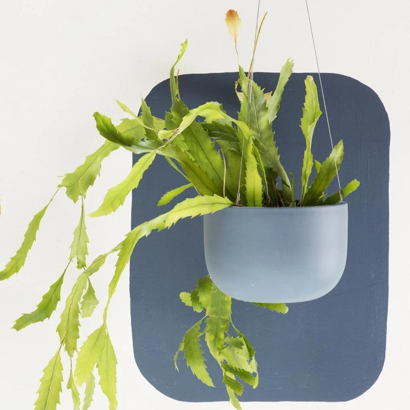 Raw Earth Slate Blue Hanging Planter
