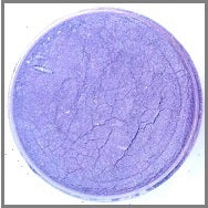 Barney PEARL POWDER COLOUR