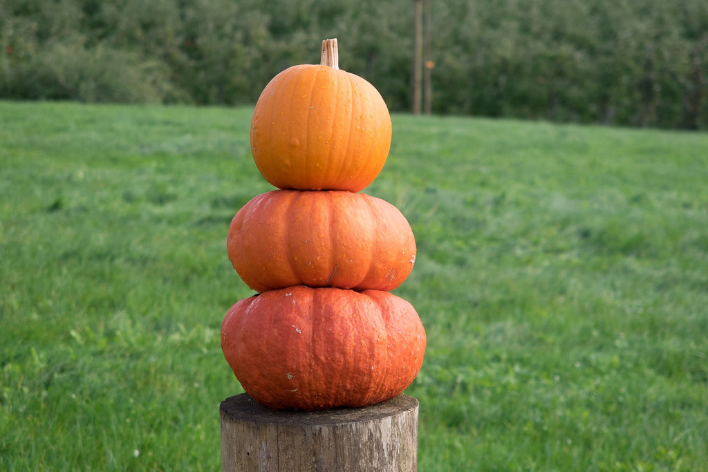 5 Unexpected Uses for Pumpkin
