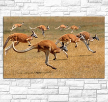 Hopping-Kangaroos-across-Grassland-Canvas-Wall-Art-2