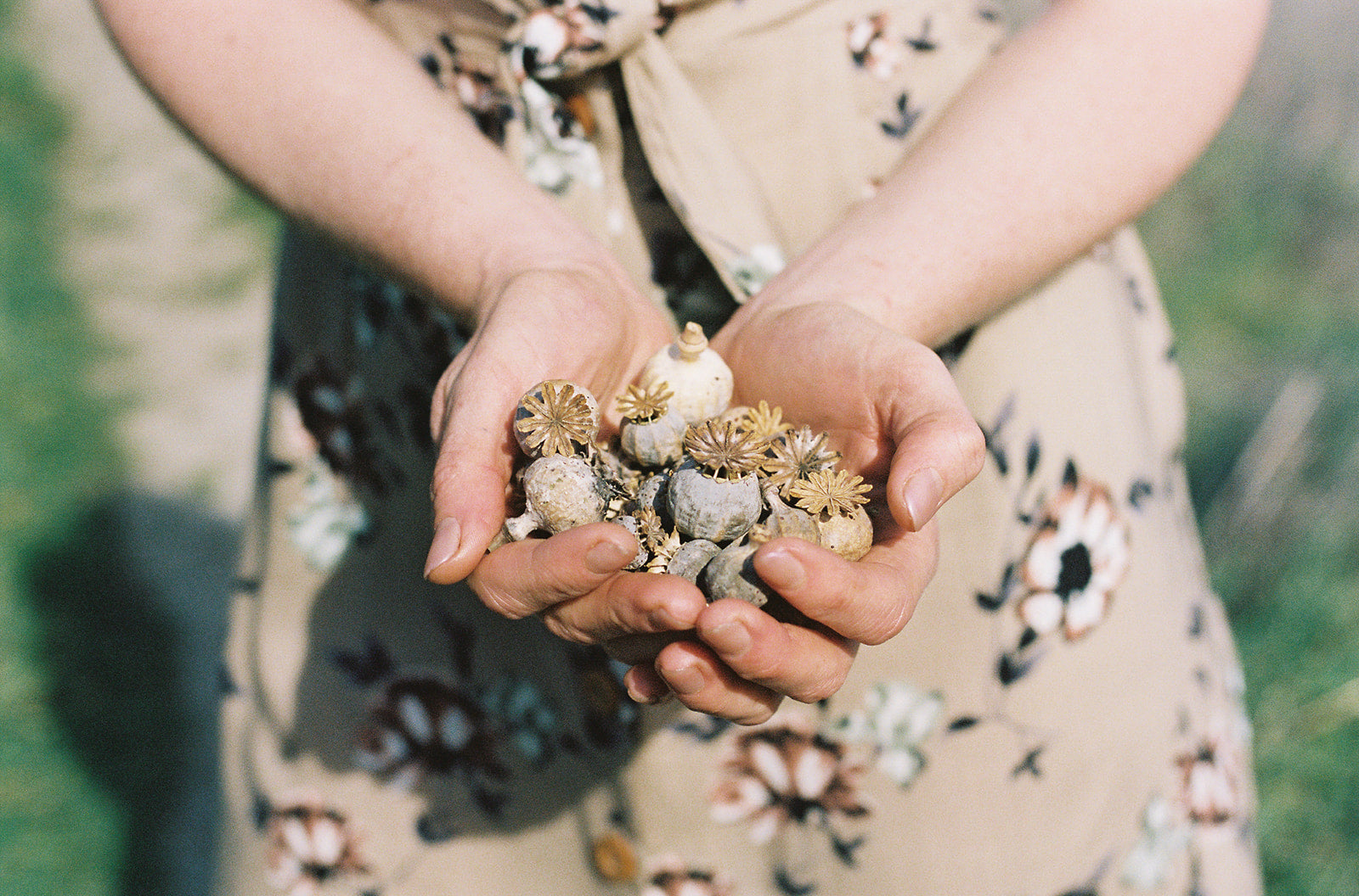 woman's hand full of poppy pods wearing a field day dress