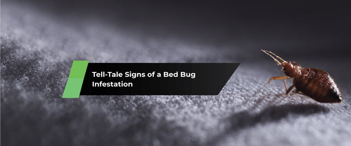 Tell-Tale Signs of a Bed Bug Infestation