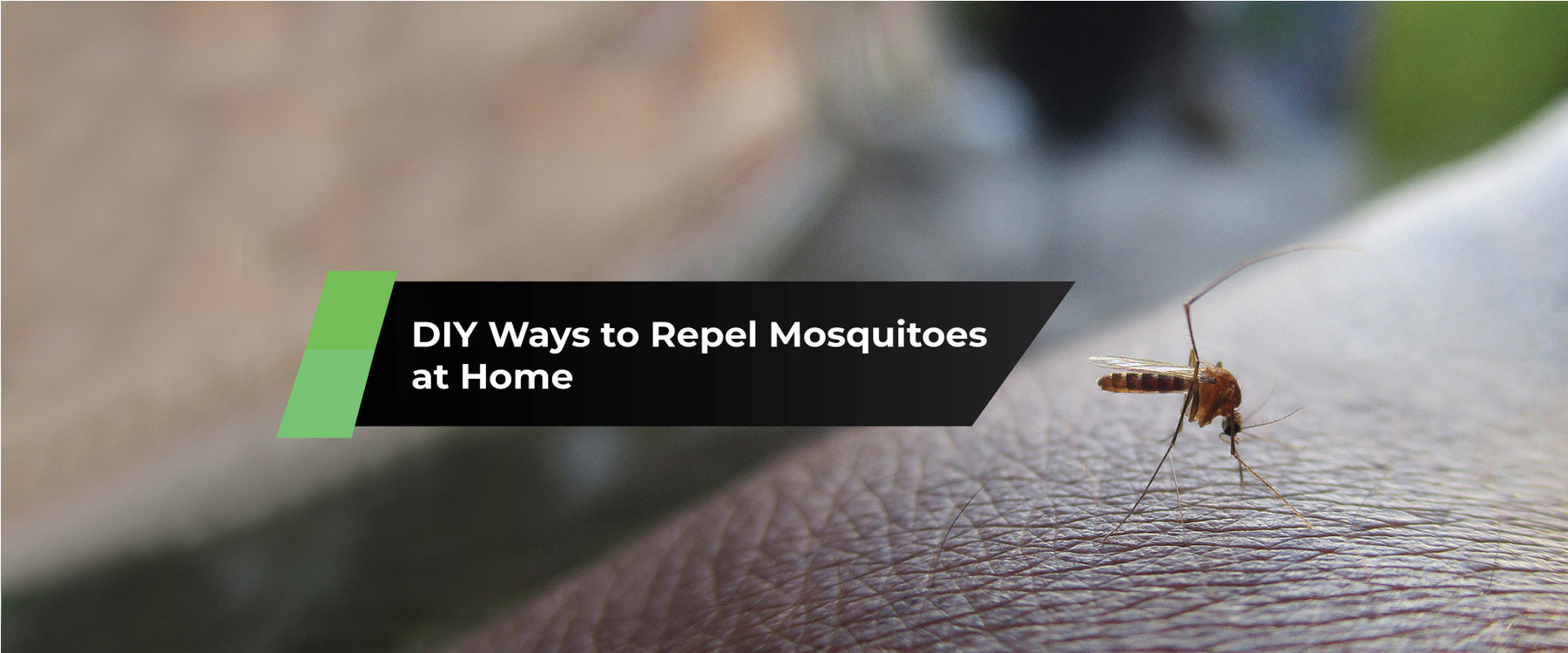 DIY Ways to Repel Mosquitoes at Home