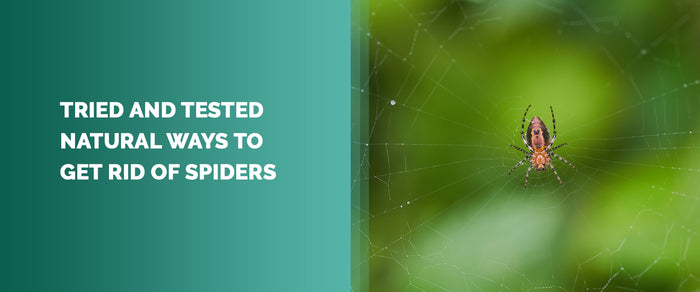 Tried And Tested Natural Ways To Get Rid of Spiders