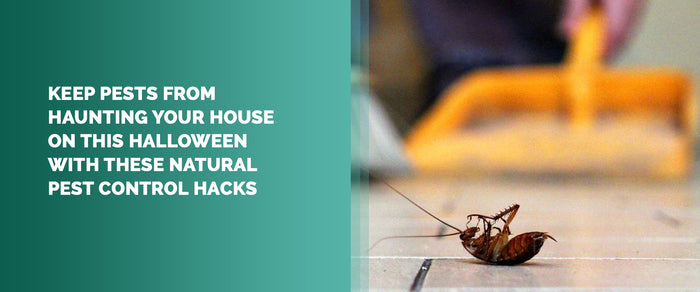Keep Pests From Haunting Your House On This Halloween With These Natural Pest Control Hacks