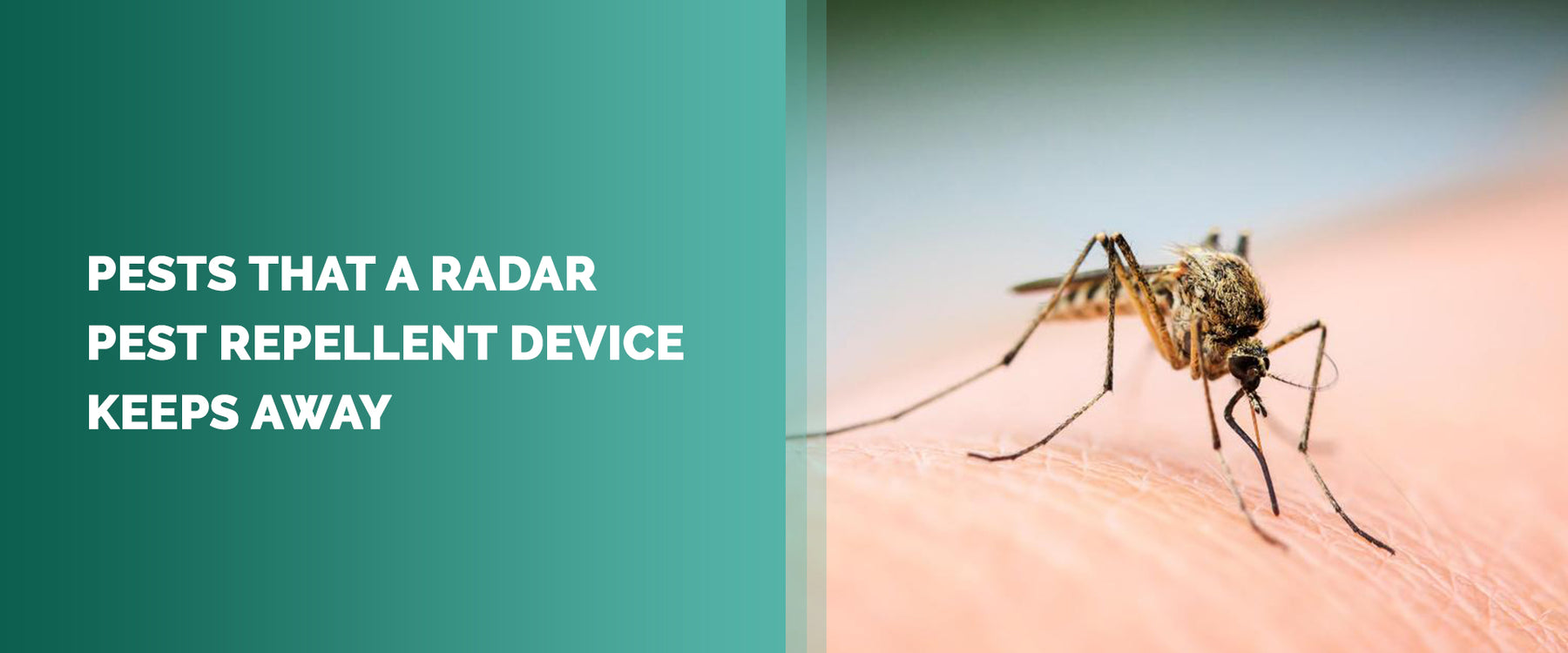 Pests That A Radar Pest Repellent Device Keeps Away