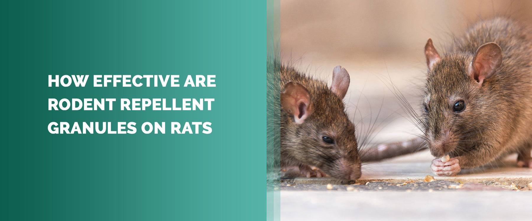 How Effective Are Rodent Repellent Granules On Rats