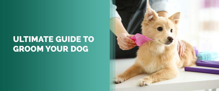 Ultimate Guide To Groom Your Dog