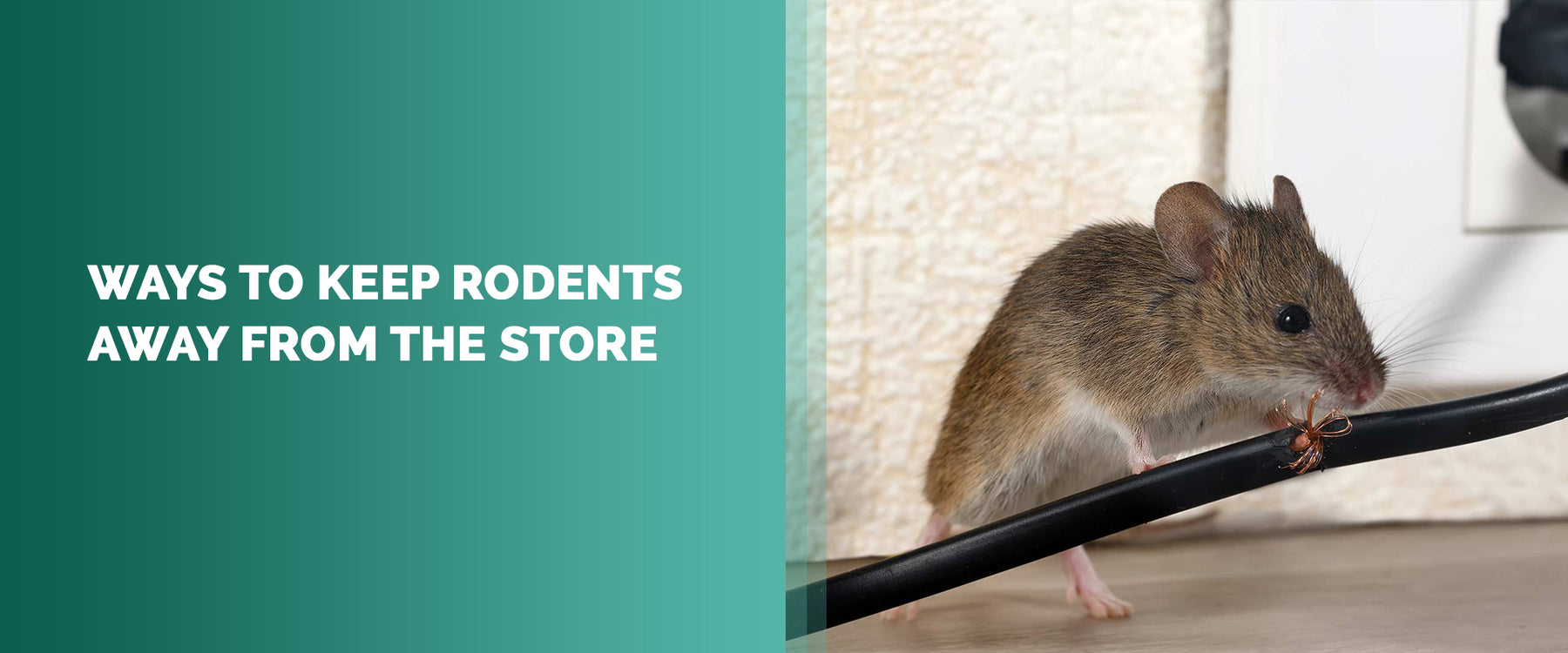 Ways To Keep Rodents Away From The Store