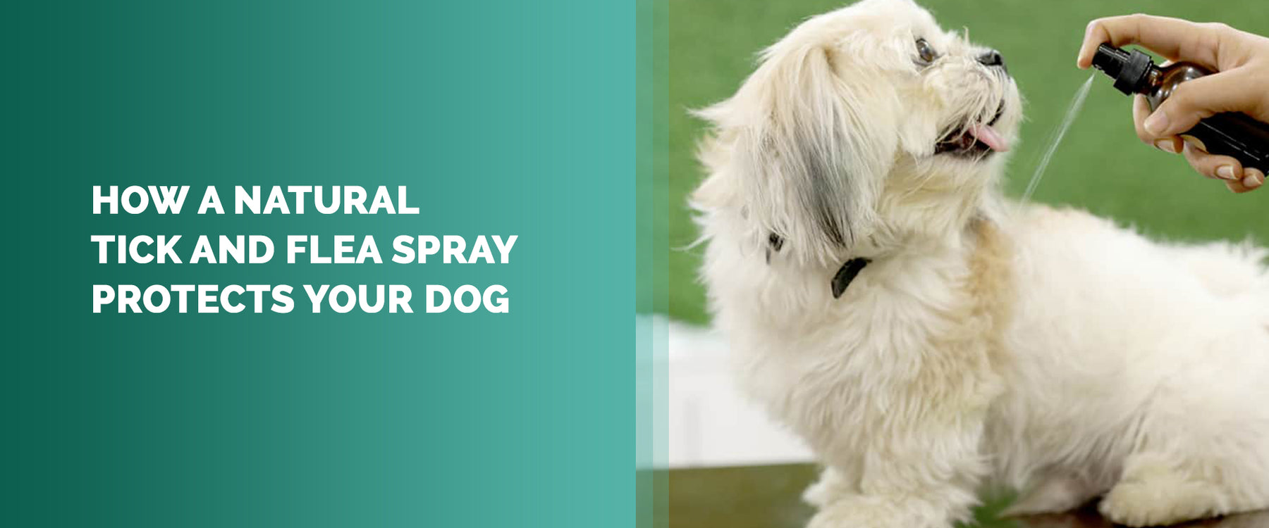 How A Natural Tick And Flea Spray Protects Your Dog