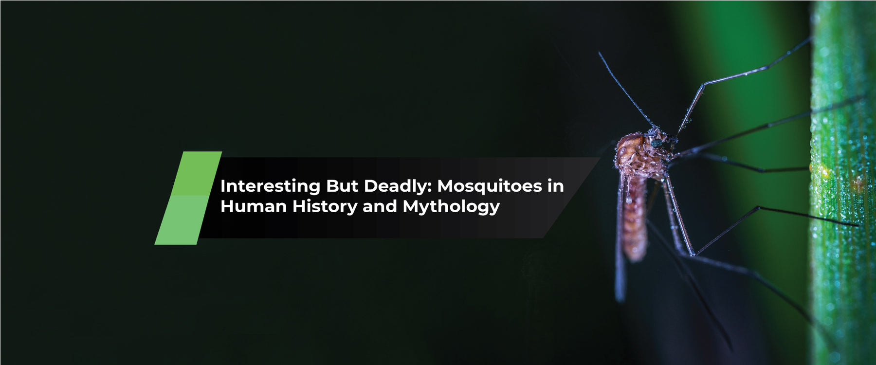 Interesting But Deadly: Mosquitoes in Human History and Mythology