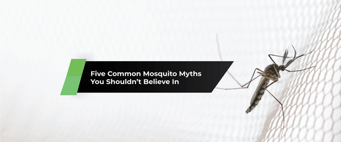 Five Common Mosquito Myths You Shouldn't Believe In