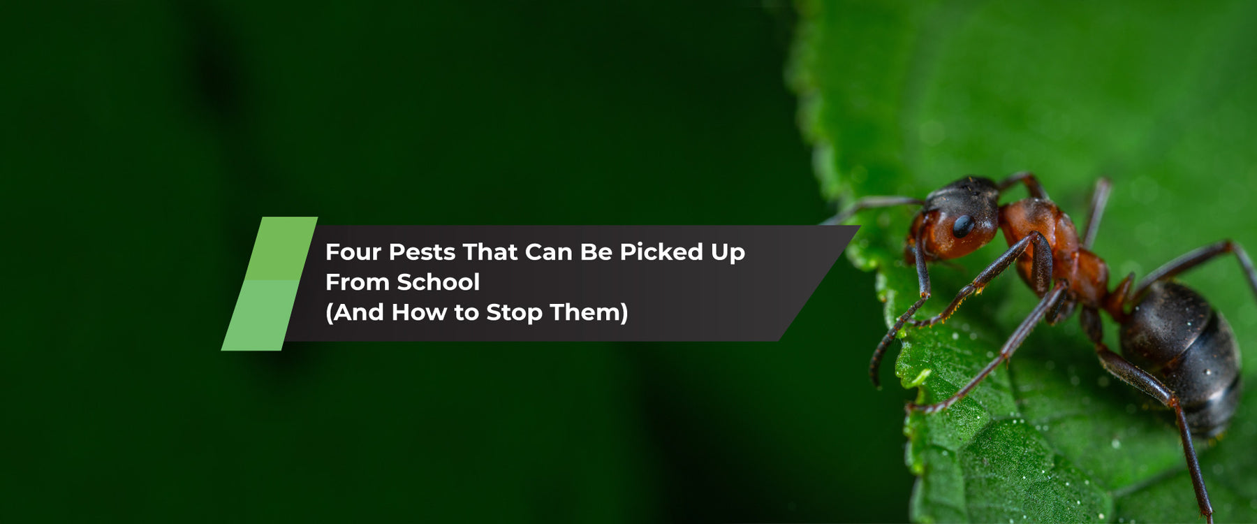 Four Pests That Can Be Picked Up From School (And How to Stop Them)