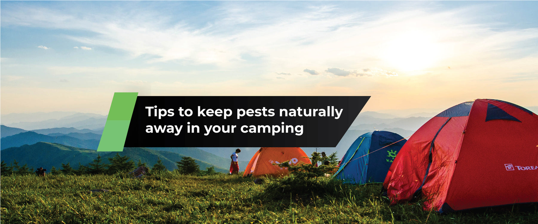 10 Tips to Keep Pests Away While Camping