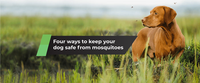 Four Ways to Keep Your Dog Safe from Mosquitoes