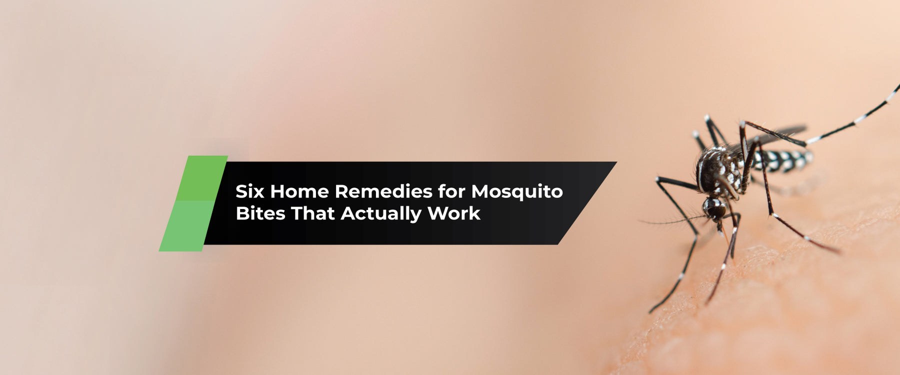 Six Home Remedies for Mosquito Bites That Actually Work