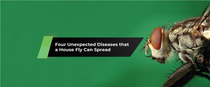 Four Unexpected Diseases that a House Fly Can Spread