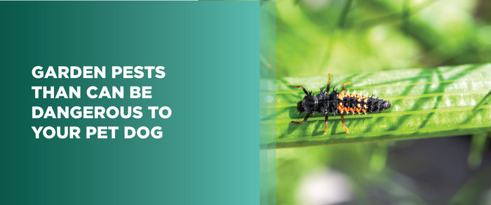 Garden Pests Than Can Be Dangerous To Your Pet Dog